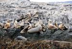 sea lions in the Tierra del Fuego National Park