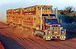 Road Train transporting cattle