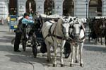a Fiaker, horse carriage