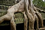 tree taking over at Ta Prohm temple