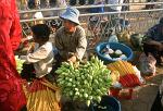 woman selling lotus flowers