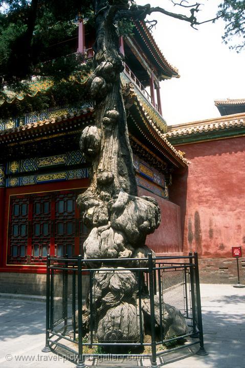 Forbidden City Imperial Garden Trees