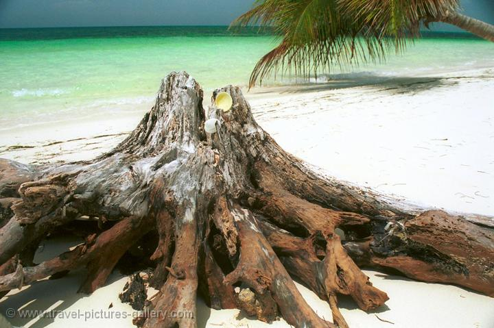 tree trunk on the beach, Cayo Levisa