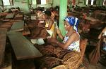 women selecting tobacco leaves in a cigar factory, Vinales