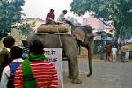 heavy traffic, an elephant crossing Janpath Lane