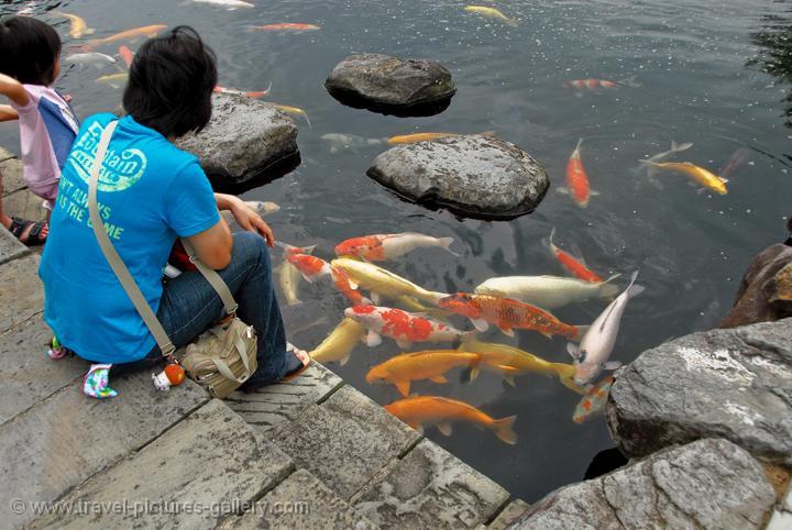 Travel pictures gallery japan nagasaki 0042 feeding koi for Feeding koi carp