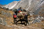 yak caravan on the steep trail to Gokyo