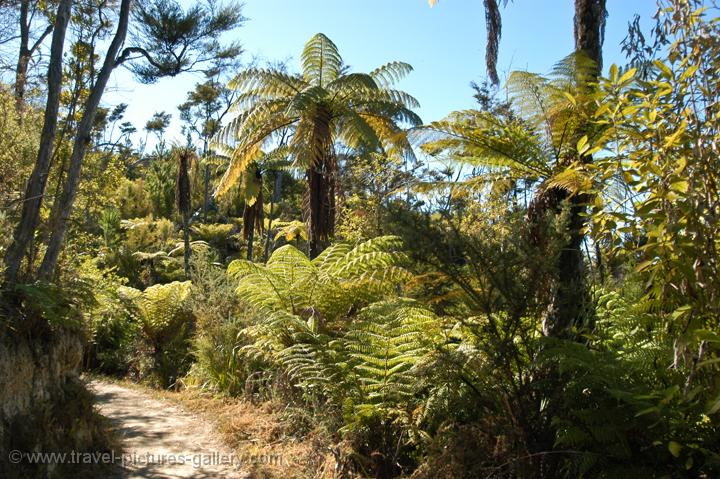 variety of ferns, Abel Tasman National Park