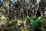 a 'Lord of the Rings' forest, Abel Tasman Coastal Track