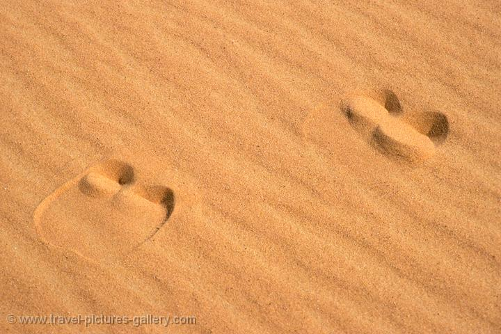 Pictures of Oman - camel tracks in the sand