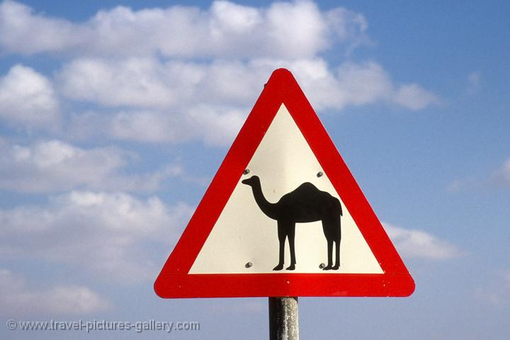 camels crossing, traffic sign