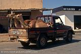 camels on a pickup