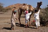 boys with their camel