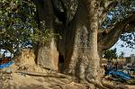 huge ancient Baobab tree, a small room inside