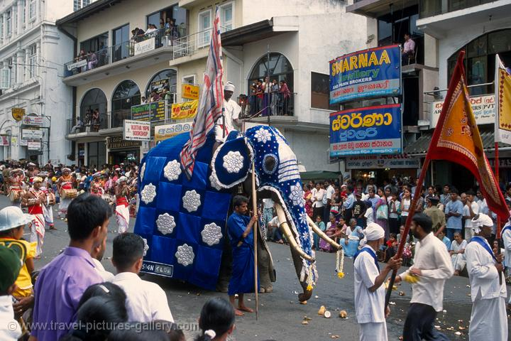 elephant procession, festival of the tooth, Kandy