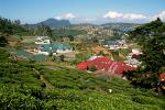 Nuwara Eliya town amidst the tea plantations