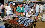 fresh catch at the Hambantota fish market
