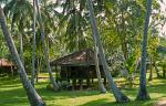 beach hut under the coconut trees, Tangalle